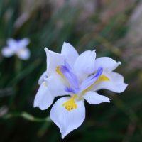 FOTD - White, Purple, Yellow Flowers